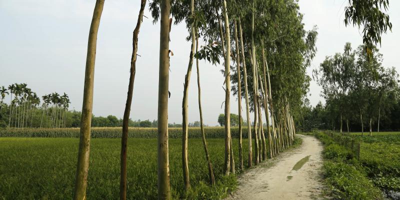 Rangpur Bangladesh