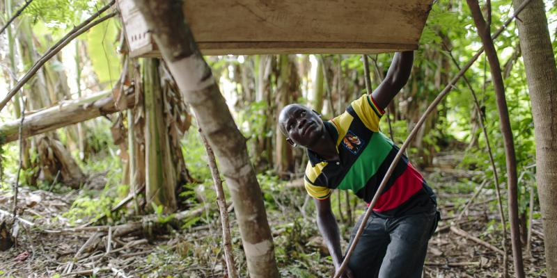 Sam Obang inspects the beehives that his community has built