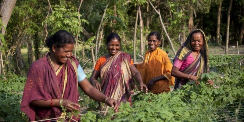 Members of a farmer group tend to their communal crops in Durgapur Bangladesh