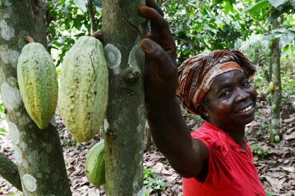 Cocoa farmer Abiba leans on a cocoa tree with ripening pods