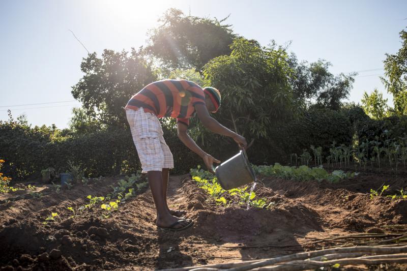 Watering a garden in Zimbabwe